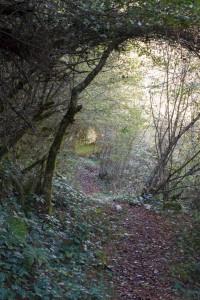 5.Συρράκο (Άγιος Γεώργιος) – Δάσος Μπάτζας (Πουλιάνα – Κουιάσα) Καλαρρύτες